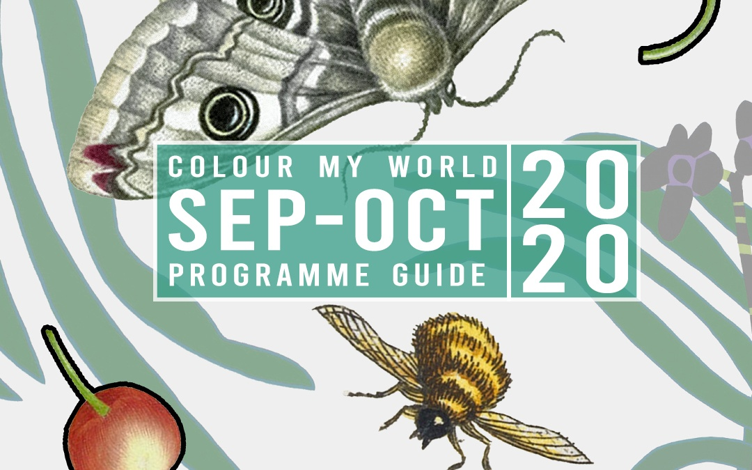 Colour My World Visual Arts E-Bulletin Sep-Oct 2020